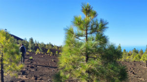 Hiking Pico del Teide - Fitness Holiday in Spain - Fitness Holiday in Tenerife - Travelling Athletes